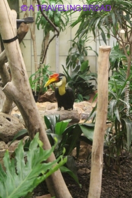 Have a Roaring Good Time at the National Zoo - A Traveling ...