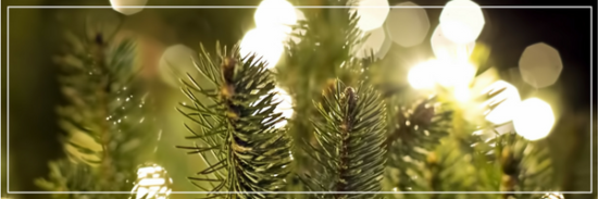 The National Christmas Tree & the Pathway of Peace: What You Need to Know