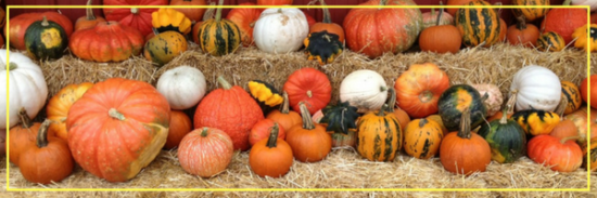 There's No Time Like Fall Festival Time!
