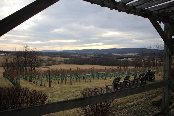 Hillsborough Vineyards