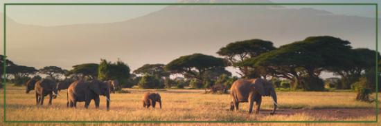 herd of elephants in Africa